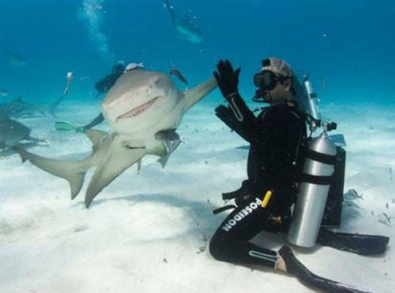 25waysToShowYoureAMan-19-shark-high-five
